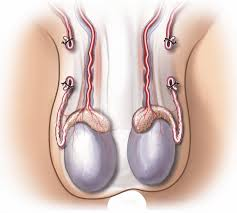 vasectomy-reversal-surgery-recovery-01